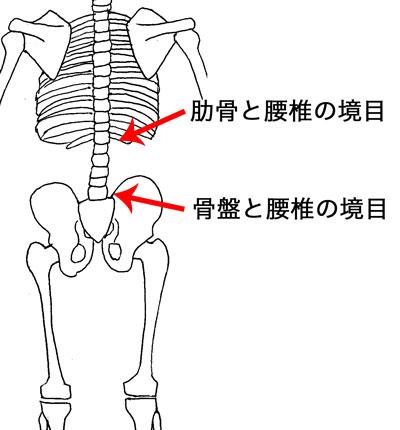 腰椎の境目