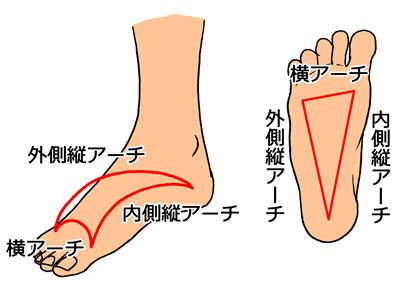 「足横アーチ」の画像検索結果