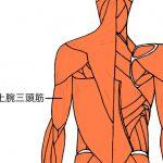 上腕三頭筋と肩こり。