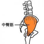 重心を安定させ運動時のパフォーマンスを向上させる。その為には骨盤の動きが重要。