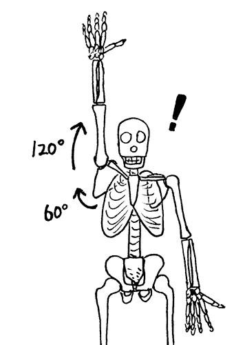 肩甲骨、肩関節で肩は上がる