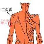 肩を挙げる筋肉、三角筋。