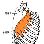 肩甲骨と股関節をゆるめて身体を動くようにする。