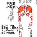 坐骨神経痛、腰やお尻周り、股関節、太ももの裏や、ふくらはぎなどの痛み。