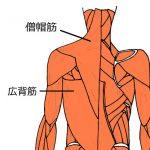 広背筋をゆるめて、ねこ背を改善。
