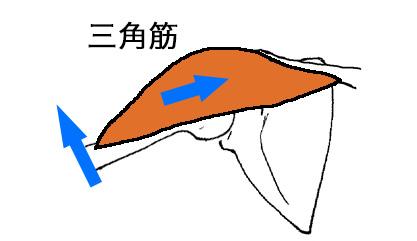 三角筋の作用