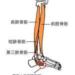 第五中足骨基底部
