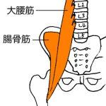大腰筋、腸骨筋