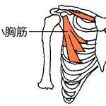 肩こり、頭痛、背部痛は猫背を矯正する。