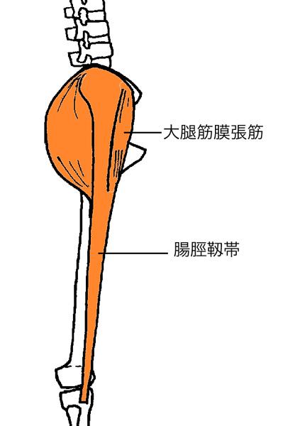 大腿筋膜張筋、腸脛靭帯