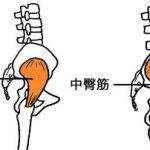 股関節の安定性。
