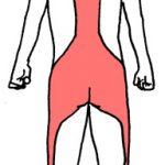 筋膜ライン