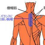 姿勢、バランスに関係の深い胸椎