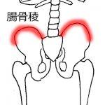腰痛の施術で重要な腸骨稜。