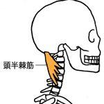 肩こり、頭痛の原因となる筋肉。