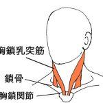 めまい、吐き気、フラつき、胸鎖乳突筋と鎖骨の関係。
