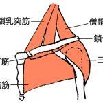 鎖骨がよく動くようになれば、肩こりは楽になる。
