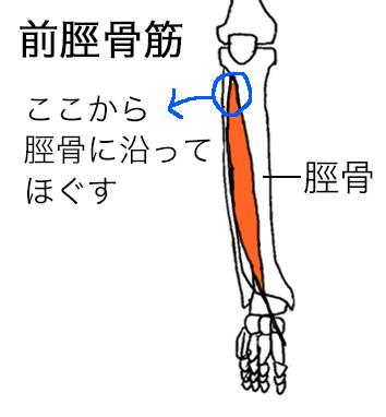 前脛骨筋ほぐしポイント