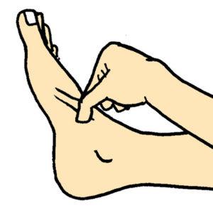 前脛骨筋の腱をつまむ