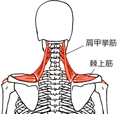 肩甲挙筋から棘上筋