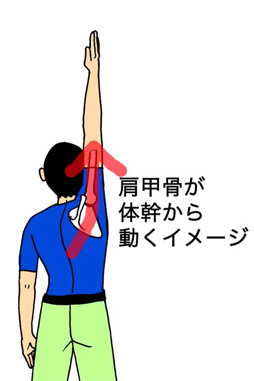 肩甲骨が動く意識、イメージ