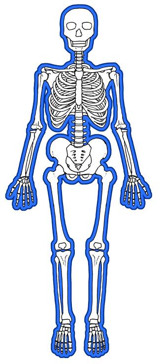 全身を包む骨膜