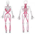 姿勢改善の秘訣は、力の流れを回復させること。
