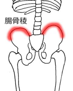「腸骨稜」の画像検索結果
