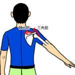 肩を上げる3段階、肩を真上まで上げるには全身をつかう