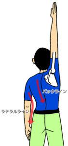 肩を上げる第3段階とアナトミーライン